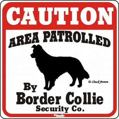 Border Collie Caution Sign, the Perfect Dog Warning Sign
