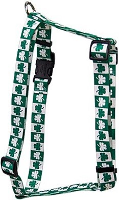 Shamrock Harness, the Perfect St. Patrick's Day Harness